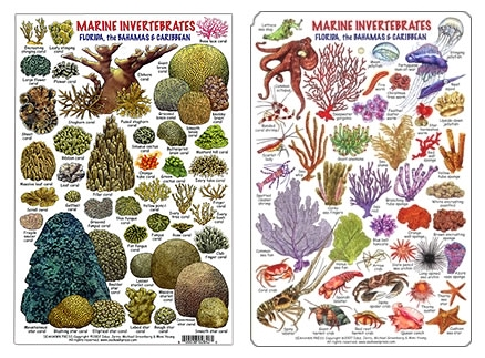 Marine Natural Products Book